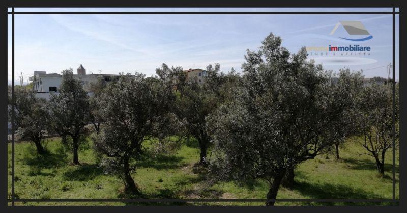 ORTONAIMMOBILIARE - возможность достройки дома в оливковой роще в Контрада-Касоне